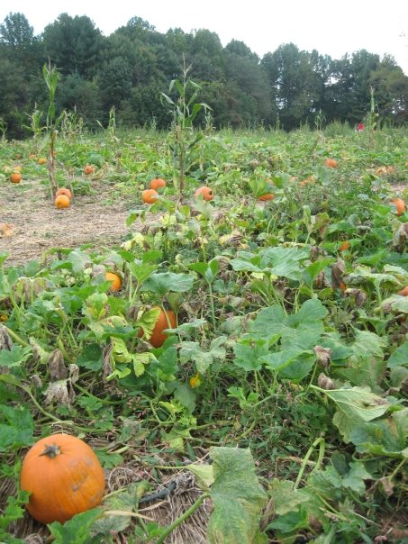 Pumpkin Patch at Butler's Orchard